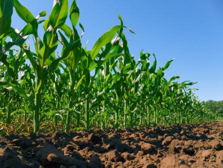 Christino Áureo atua junto à Conab para baratear o custo do milho para pequenos produtores fluminenses